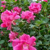 Gardening 2014 - 116_1495.JPG