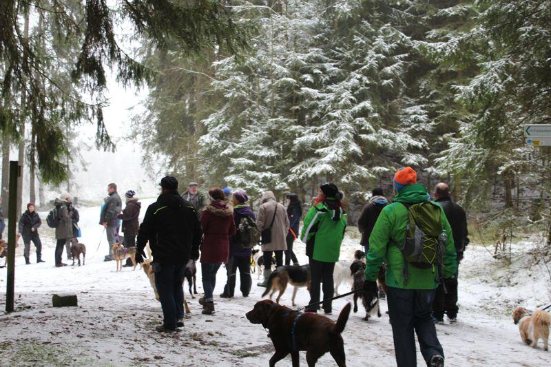 01. Januar 2016: Neujahrswanderung ins Waldnaabtal - IMG_1559.JPG