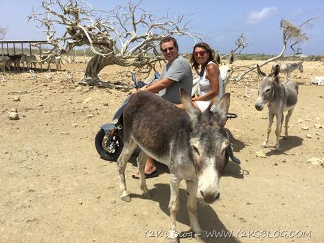 Santuario degli asinelli - Bonaire