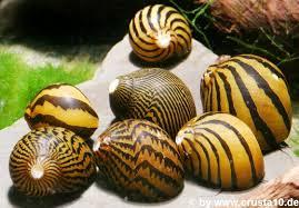 Các loại sinh vật vệ sinh hồ thủy sinh