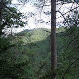 Campaments amb Lola Anglada 2005 - CIMG0401.JPG