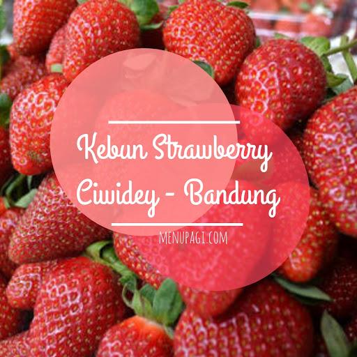 Gambaran Lengkap Lokasi Kebun Strawberry Ciwidey Bandung
