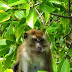 Mangroven Tour