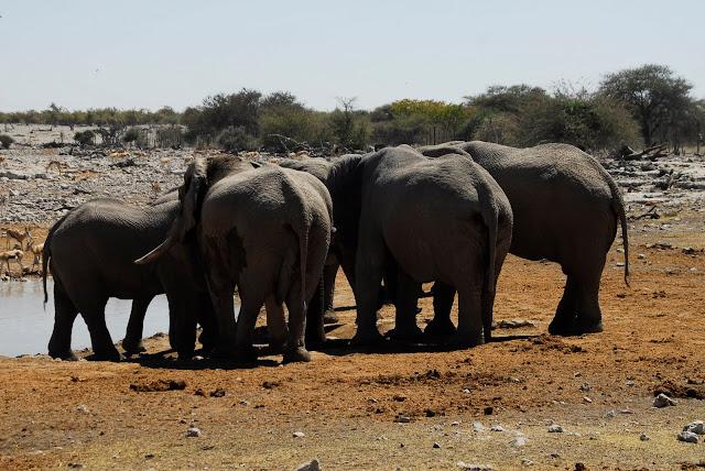 أفضل ما في أفريقيا  Best of Africa Namibia_180807121728