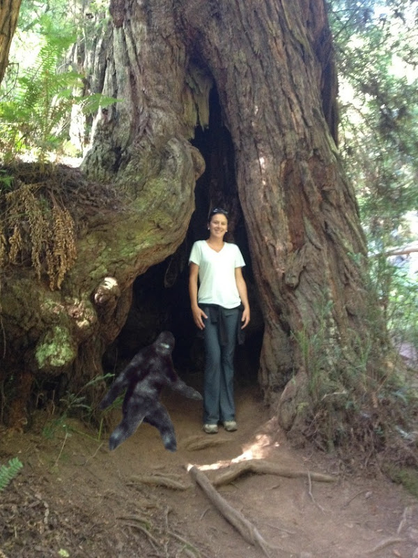 Bigfoot in the Red Woods