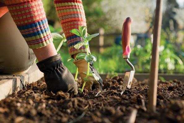Nothing beets fall gardening1