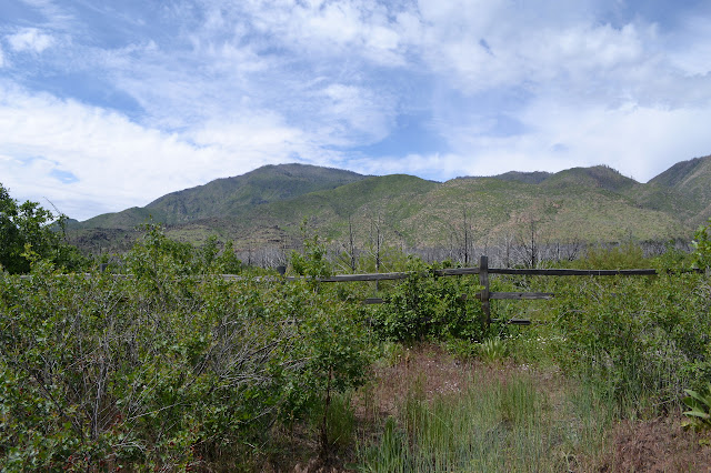 a fenced edge in front of somewhat green mountains