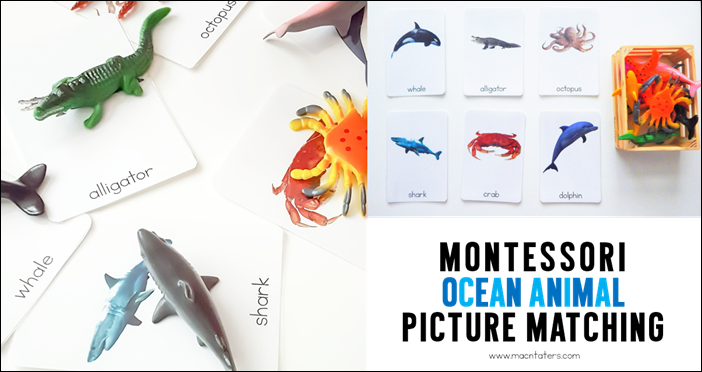 Montessori Ocean Animal Picture Matching Activity