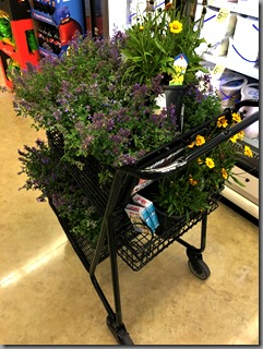 Shopping: gardener's edition