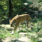 Pittsburgh Zoo Revisited - DSC05085.JPG
