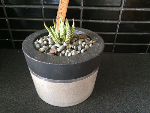 Succulent plant in silver concrete pot
