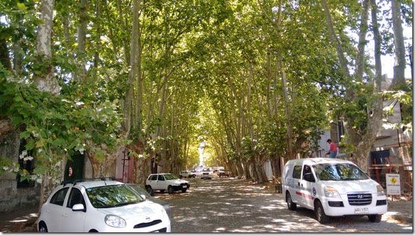 avenida-em-colonia