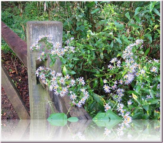 flowersIMG_9241