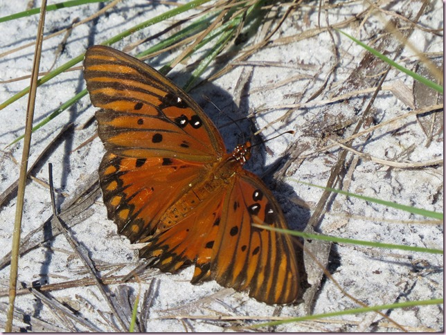 butterflyIMG_9899