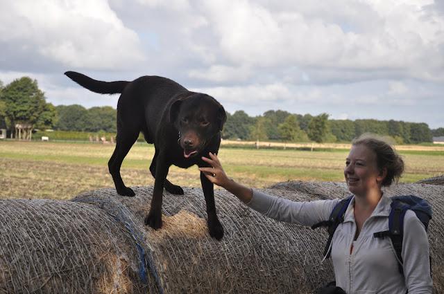 Survival voor Baas en Hond 2012 - DSC_0141.JPG