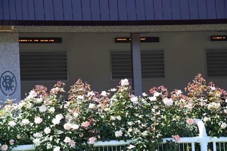 roses_stalls 2