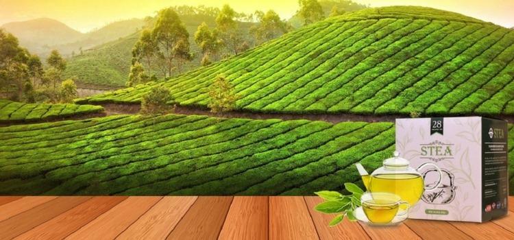 teh_hijau_STEA_malaysia