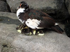 Baby ducks with their Mommy (Zoo in Guadalajara)