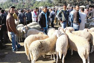 A l'est du pays, le mouton ne fait pas l'exception: Aïd el-Adha : la rentrée scolaire est passée par là