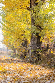 The first sight at the autumn trees, Comsats University