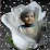veena bhole's profile photo
