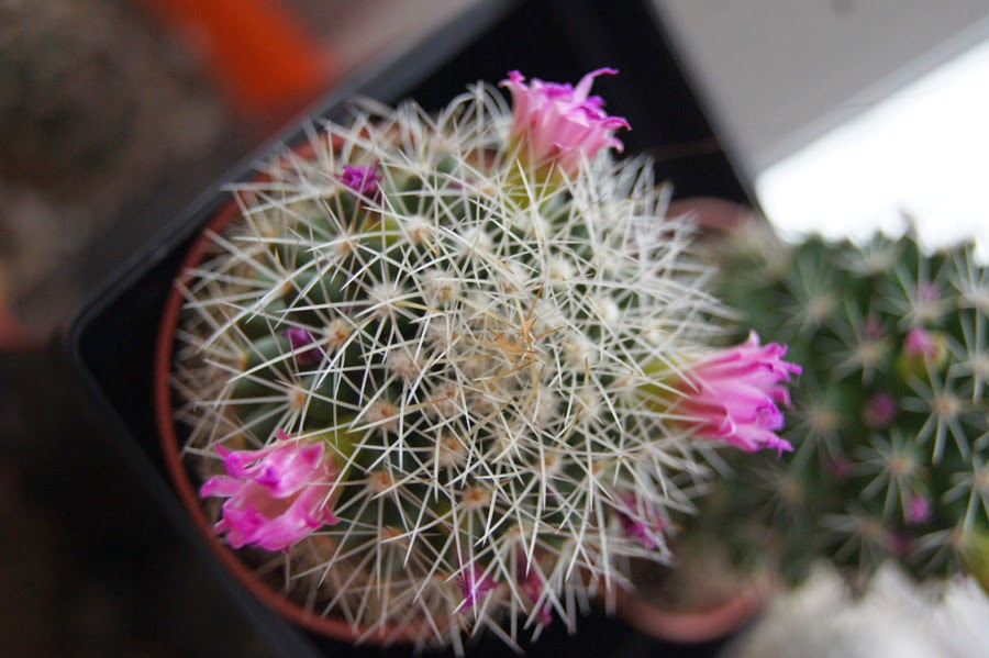 new plants DSC08941a