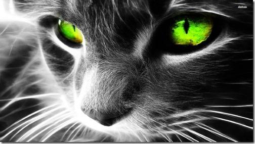 fotos de gatos (18)