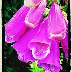 20120723-01-pink-flower-macro.jpg