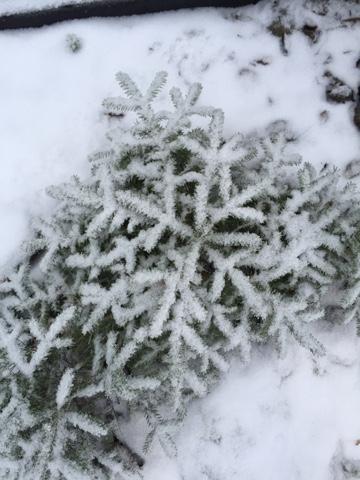 Luminen joulukuusi