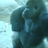Pittsburgh Zoo Revisited - DSC05181.JPG