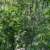 En forêt près de Tunda Loma (Calderon, San Lorenzo, Esmeraldas), 30 novembre 2013. Photo : J.-M. Gayman