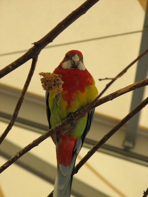 Birds of the Outback - img_1471a.jpg