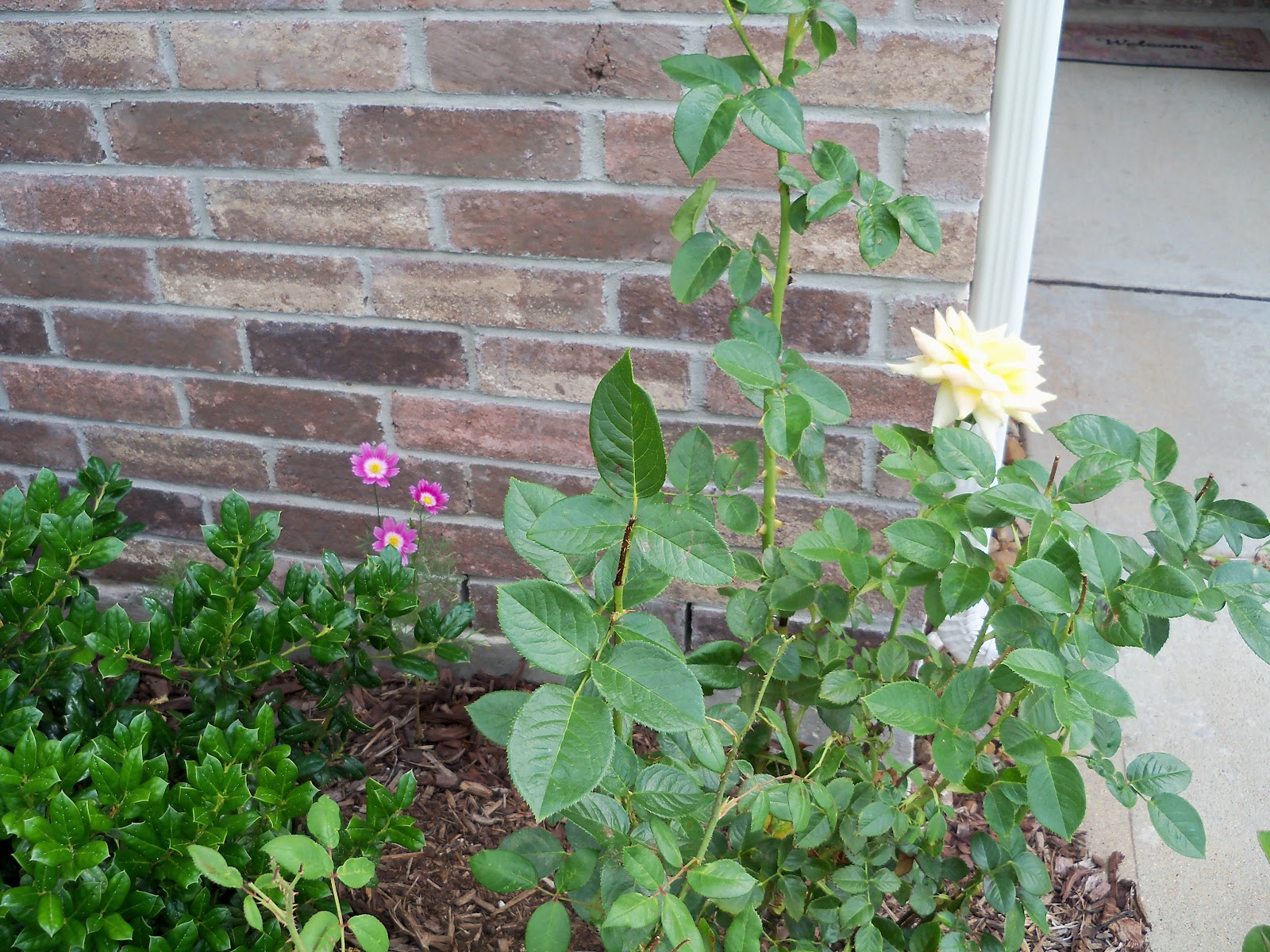 Gardening 2010, Part Two - 101_2844.JPG