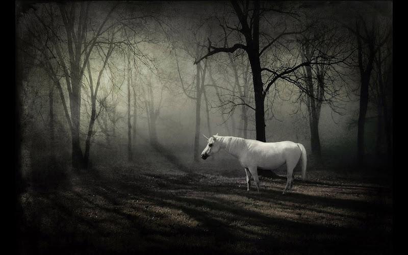 The Last Unicorn, Magic Animals 2