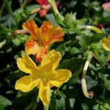 Gardening 2011 - 100_9114.JPG