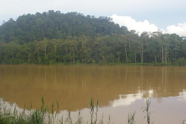 La Kinabatangan et la colline de Pangi. Sukau, 13 août 2011. Photo : J.-M. Gayman