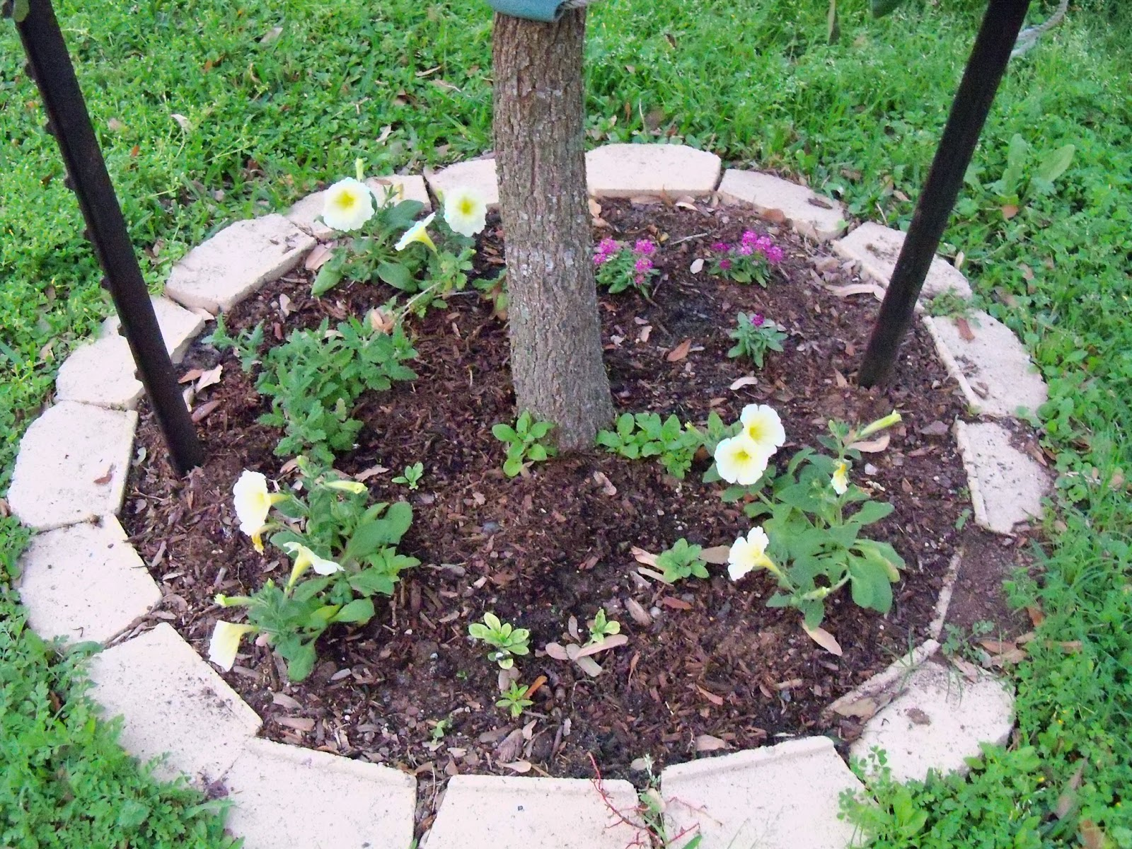Gardening 2012 - 115_1253.JPG