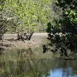 Cowan Creek (5445)