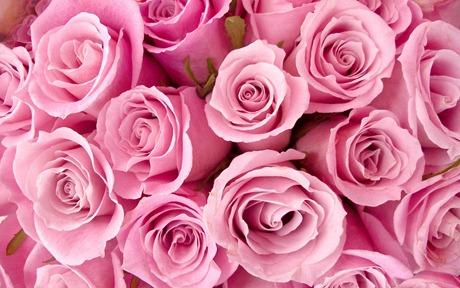 rosas4