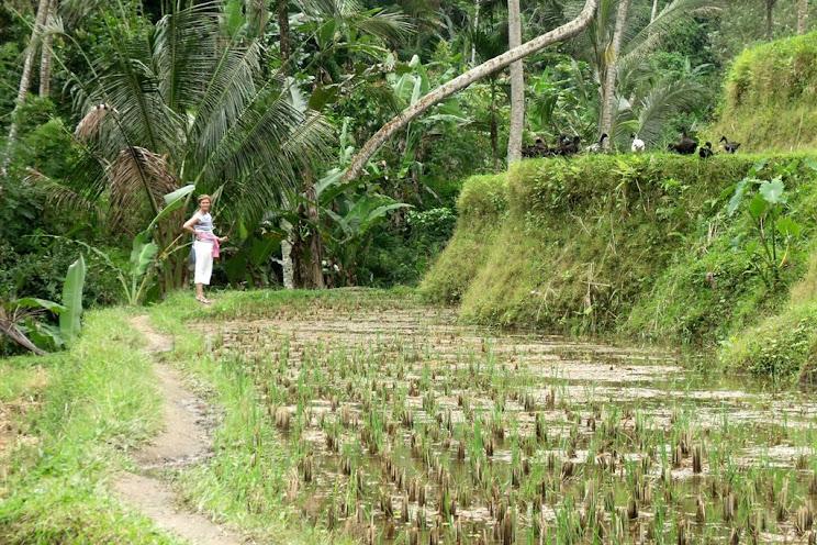 Teraszos rizsföldek mellett