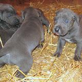 Bluebelle & Cobys 4/19/10 litter - IMG_0772.JPG