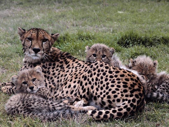 Best Wild Animal Photos of 2012