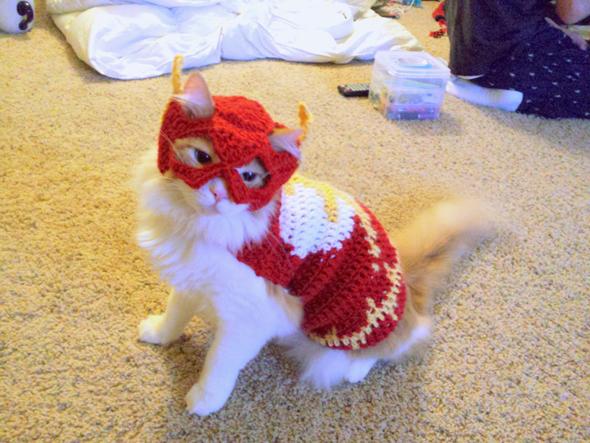 Gato disfrazado de superheroe