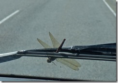 Dragon Fly on Cariboo Highway, BC