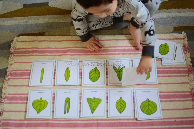 Montessori Inspired Leaf Shapes Nomenclature Cards