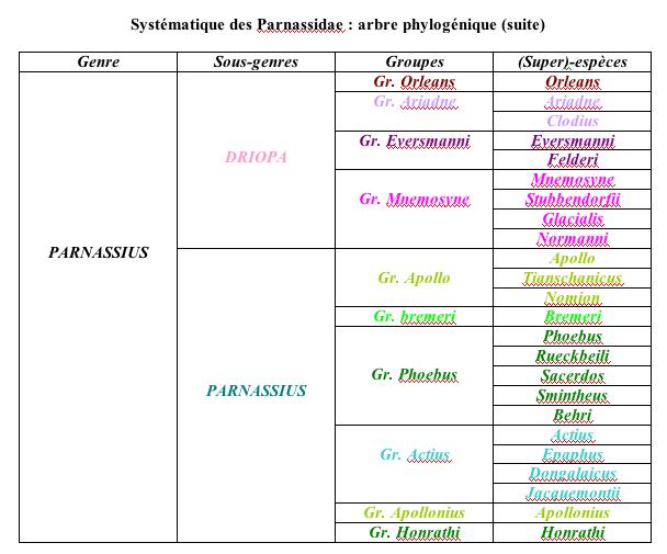 Parnassidae - systematique_parnassidae2.jpg
