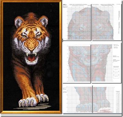 tigre fiero