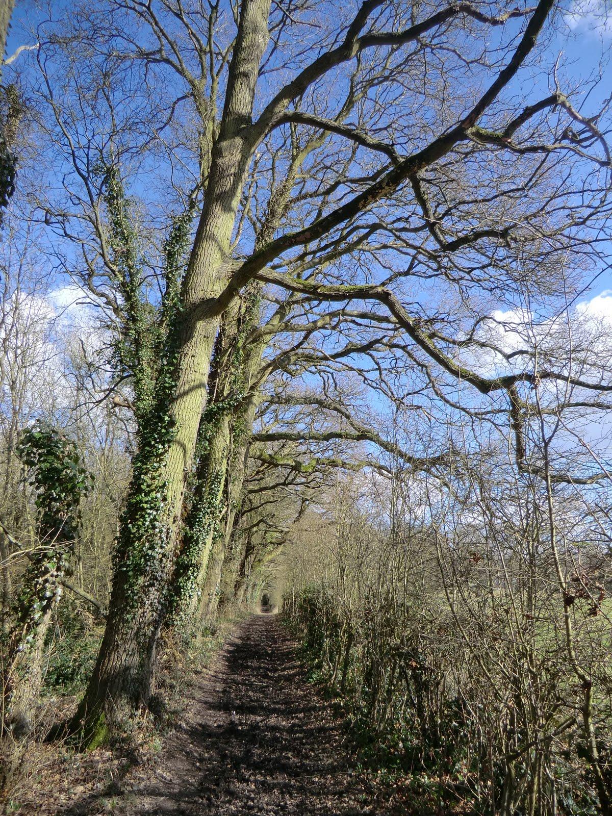 CIMG6062 Bridleway to Greywell Hill