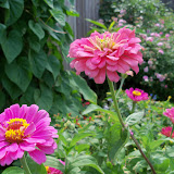 Gardening 2011 - 100_8659.JPG
