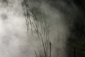Steam and plants, Rotorua Thermal Area